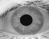 iris_model1