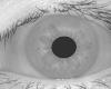iris_model2