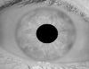 iris_model4